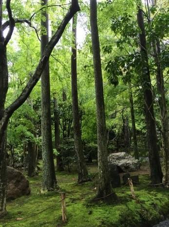仁和寺苔緑濃い